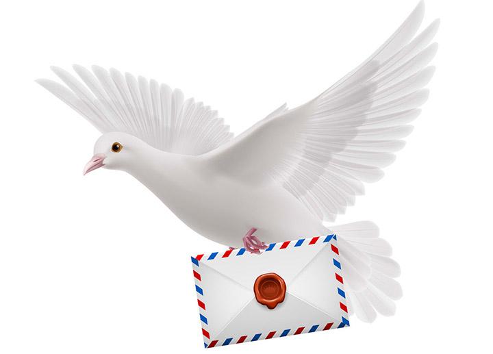 Witte_duif_met_brief